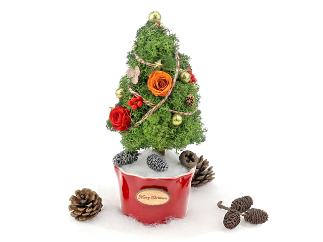 Gift Accessories - Tiny Teeny Christmas Tree Preserved Flower M18 - L36515502 Photo