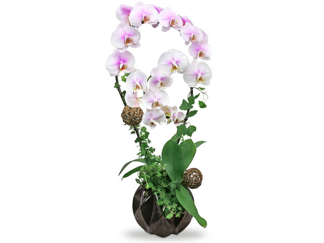 Orchids - Orchids Vase Florist Gift  PH21 - L76606992 Photo
