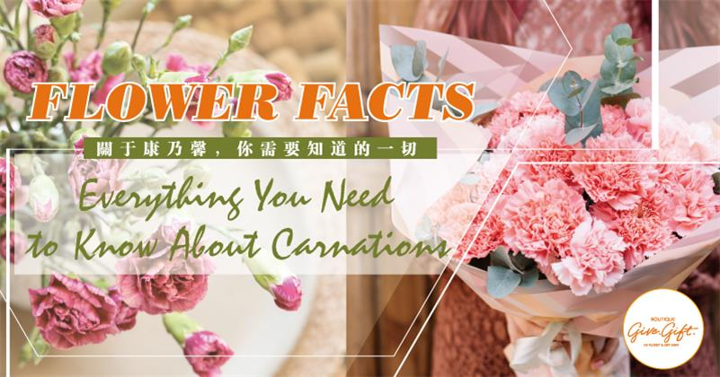 Flower Facts Everything You Need To Know About Carnations Give Gift Boutique Flower Shop