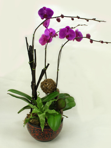 CNY Gift - Orchids D - B3192 Photo