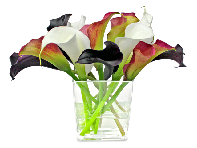 Florist Flower in Vase - Calla-Lilies Florist arrangement V1 - L3135215 Photo
