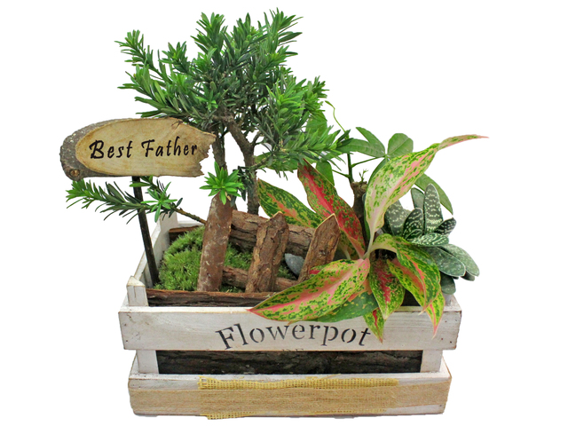 Flower Shop Plants - Father's Day Green Plant  P2 - L3123068 Photo