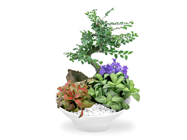 Flower Shop Plants - Good Fortune Green Gift Plant A01 - L36668489 Photo