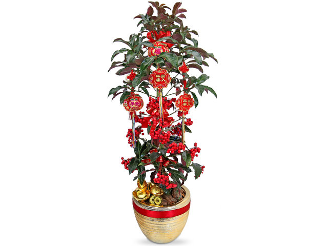 Flower Shop Plants - Nandina Plant RC88 - CF20130A3 Photo