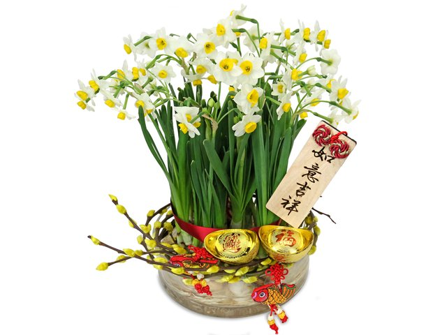 Flower Shop Plants - Narcissus Tazetta Planter A1 - CF20125A2 Photo