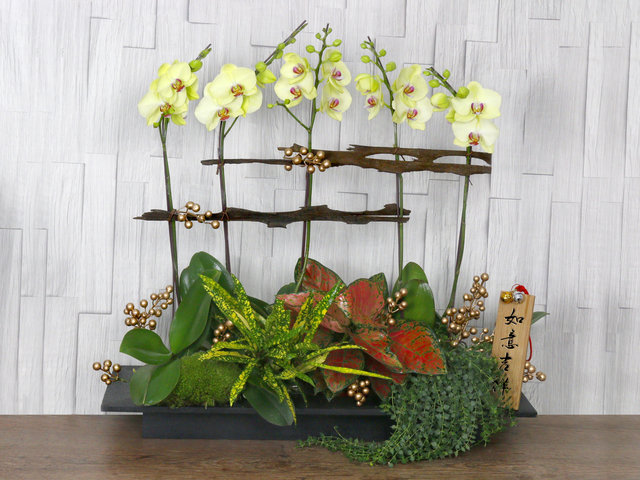 Orchids - CNY Orchid Deco CL26 - L76610684 Photo