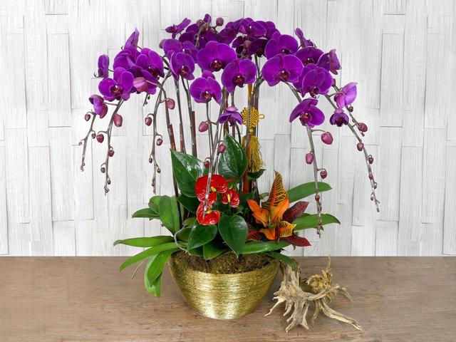 Orchids - CNY florist Deco CL30 - L76610699 Photo