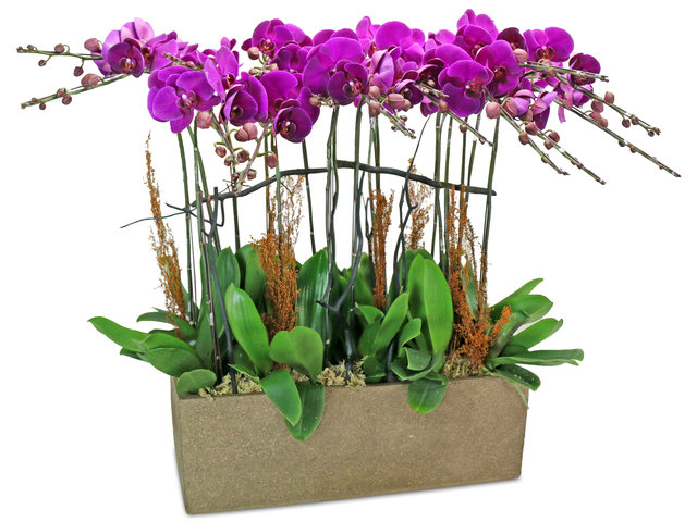 Orchids - Orchids decor plant x 18 - L76608673 Photo