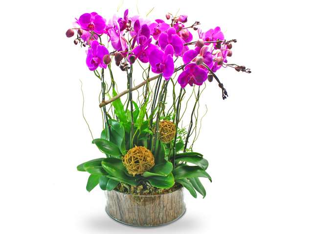 Orchids - Phalaenopsis orchids x 10 in glass - L39388 Photo