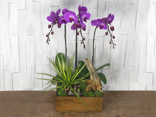 Orchids - ochrids decor plant  R05 - L76610715 Photo