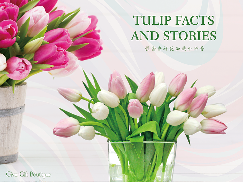 Tulip Facts and Stories