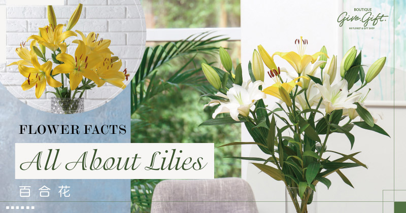 Flower Facts: All About Lilies