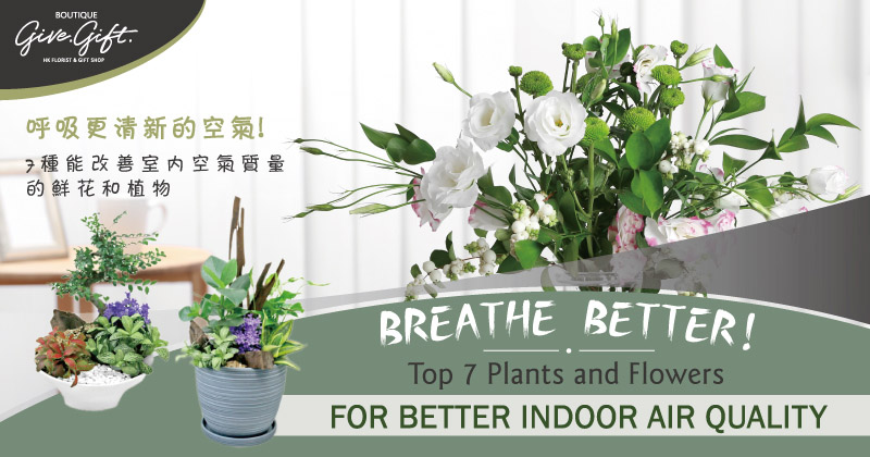 Breathe Better! Top 7 Plants and Flowers for Better Indoor Air Quality