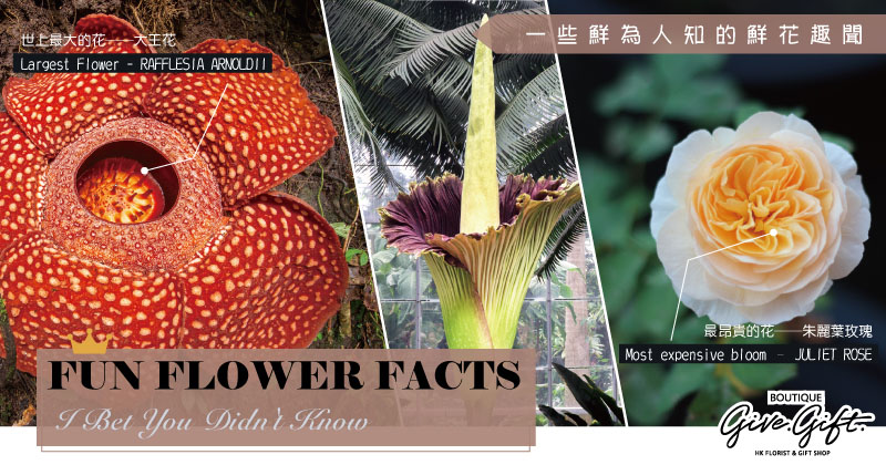 Fun Flower Facts I Bet You Didn't Know