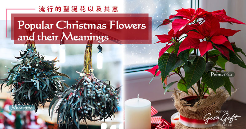 Popular Christmas Flowers and their Meanings