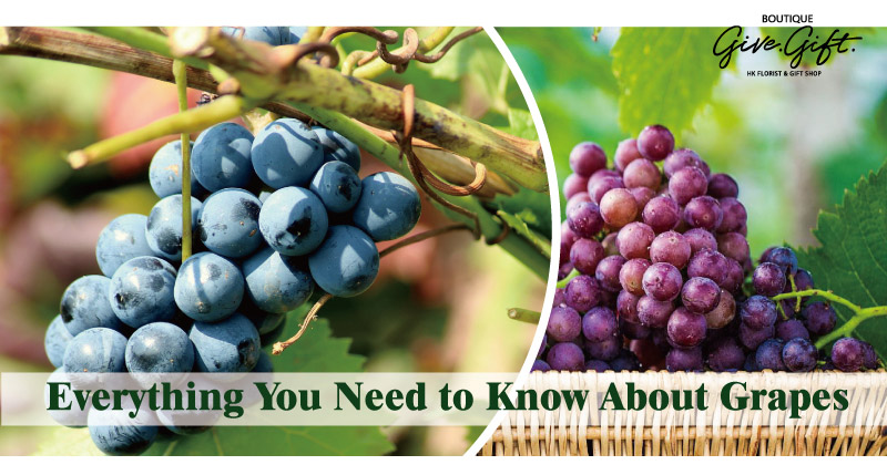 From Table Grapes to Raisins and Wine: Everything You Need to Know About Grapes