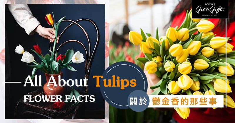 Flower Facts: All About Tulips
