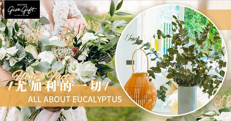 Flower Facts: All About Eucalyptus